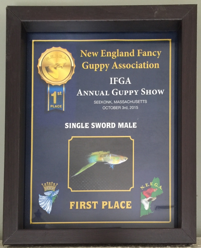 First place lower sword at the 2015 IFGA Annual. I also placed 4th out of 15 entries in the Purple Tank category.