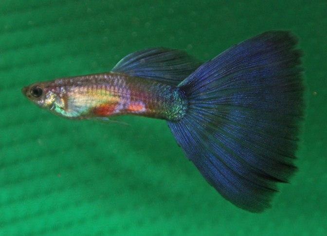 purpledeltaIMG_8740