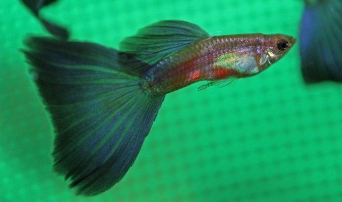 purpledeltaIMG_8773